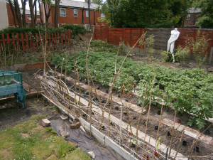 The main growing area of the garden full of first early and main crop potatoes.